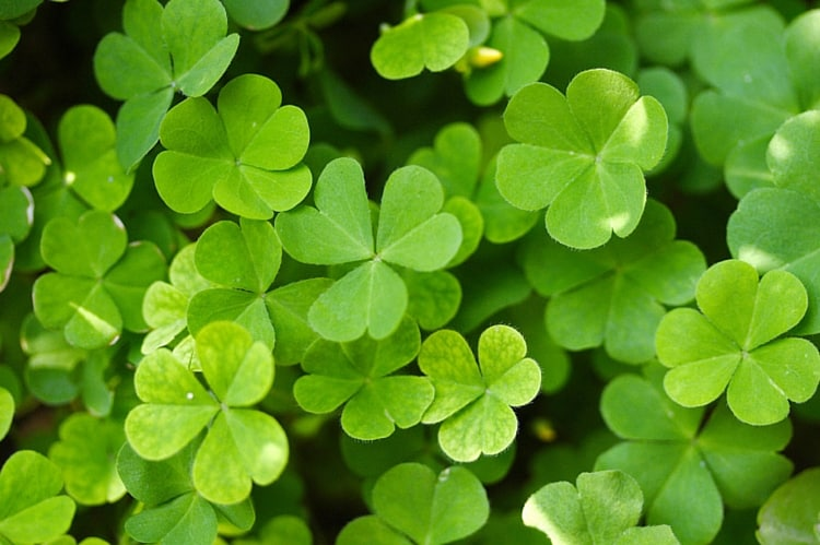 What to Do in Fort Myers for St. Patrick's Day