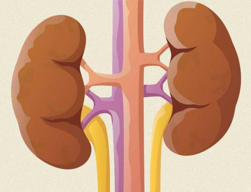 Moderate Alcohol Consumption Protects Against Kidney Disease